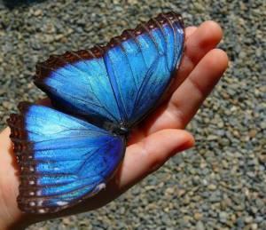 butterfly-effect03