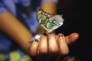Butterfly on a Girl's Hand