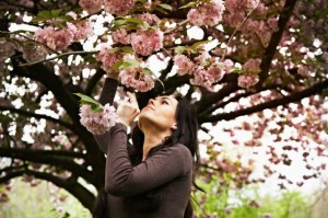 young woman under a cherry tree takes a smell of a cherry blossom