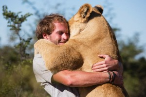 Man and lioness: Sirga the lioness and Val hugging