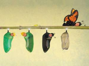 404619-babies-butterfly-and-cocoons-anne-geddes